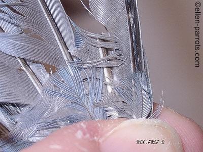 ©ellen-parrots.com